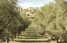 sejour randonnée baux de provence