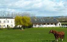 randonnée a pied en normandie a coeur d un haras de chevaux
